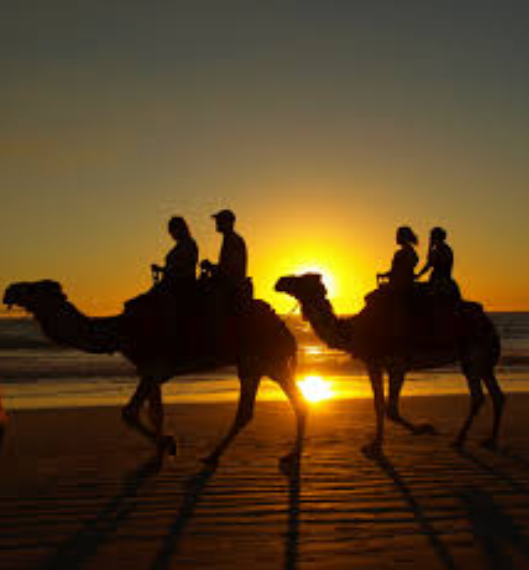 Camels on the beach_Broome